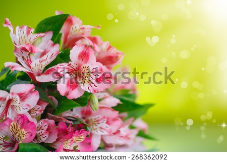 beautiful bouquet of flowers alstroemeria on a green background - stock photo