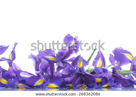 beautiful bouquet of flowers irises on a white background - stock photo