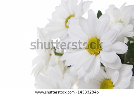 Beautiful bouquet of fresh white daisies on a white background