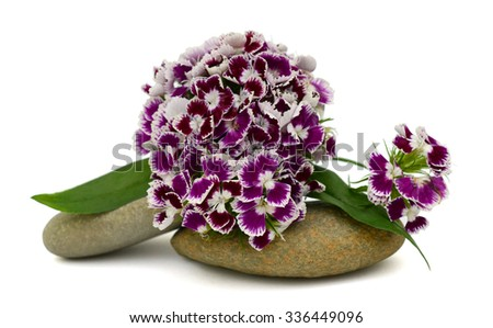 beautiful bouquet of Pansy flower isolated on white background