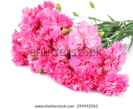 Beautiful bouquet of pink carnation isolated on white