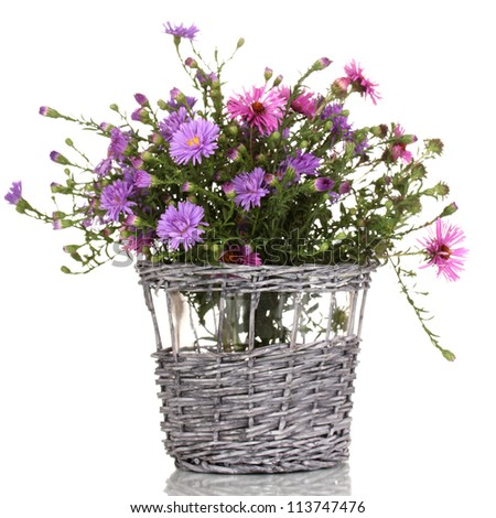 beautiful bouquet of purple flowers in basket isolated on white - stock photo