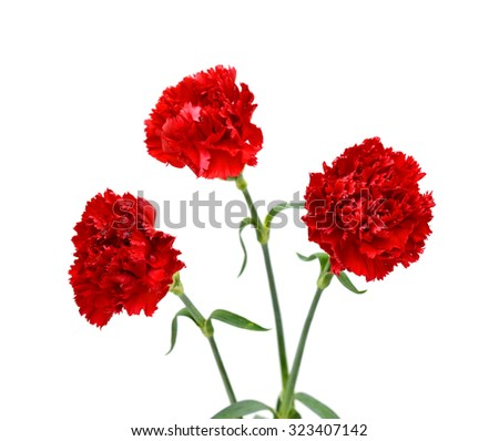 Beautiful bouquet of red carnations flower isolated on white background - stock photo
