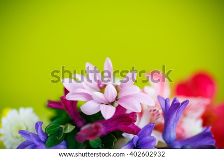 beautiful bouquet of spring flowers  - stock photo