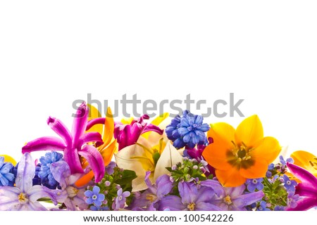 beautiful bouquet of spring flowers on a white background - stock photo