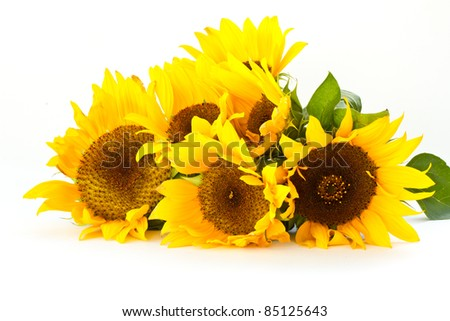 beautiful bouquet of sunflowers on a white background - stock photo