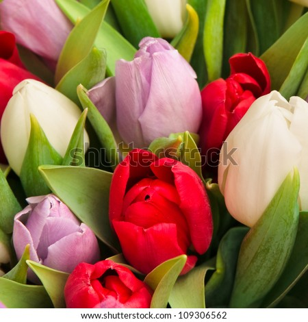 beautiful bouquet of tulips, different colors - stock photo