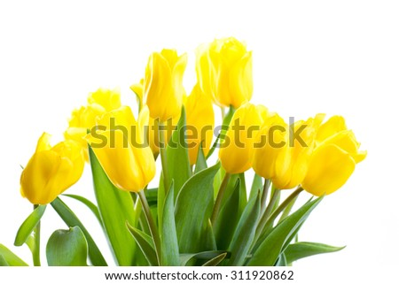 beautiful bouquet of yellow tulips on a white background - stock photo