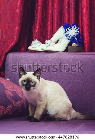 Beautiful bride's wedding shoes, garter, wedding rings and cat - stock photo