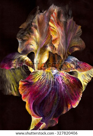 Beautiful  bright and rich exotic flower iris on black background. Burning paint - multicolored flames sparks and glare in the dark. Realistic drawing  on paper texture - hand illustration. - stock photo