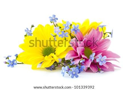 beautiful bright flowers Chrysanthemum on a white background - stock photo