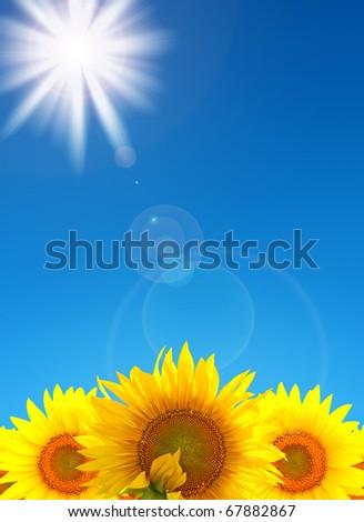 Beautiful bright landscape field of sunflowers - stock photo