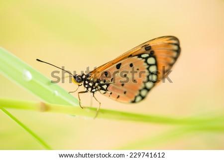 Beautiful brown butterfly in green grass field  - stock photo