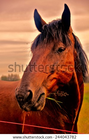 Beautiful brown horse - stock photo