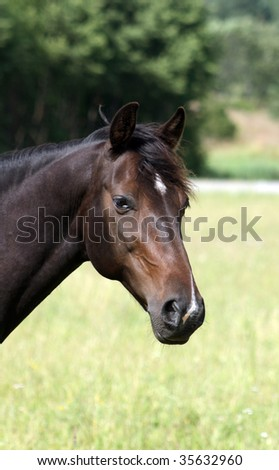 Beautiful brown horse curious of something
