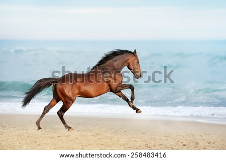 Beautiful brown horse galloping along the shore of the sea on a summer day. Stallion with long mane jumping on background of ocean - stock photo