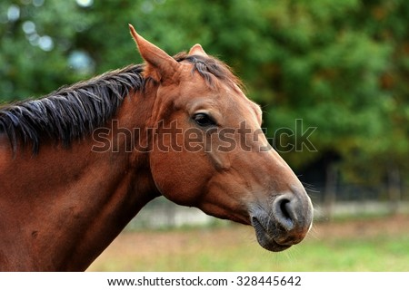 Beautiful brown horse head - stock photo