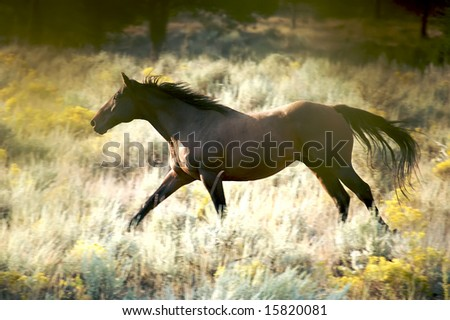 Beautiful Brown Horse Running in the Wild - stock photo