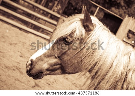Beautiful brown horse with white arrow in sepia