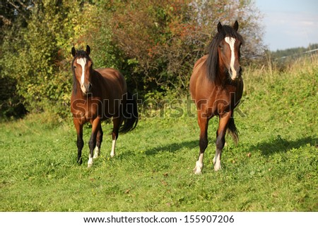 Beautiful brown horses on pasturage in autumn