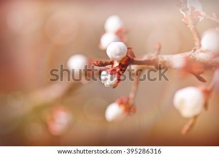 Beautiful budding buds - stock photo