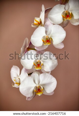 Beautiful bunch of orchid flowers on brown background - stock photo