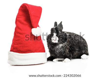 Beautiful Bunny ready for Christmas. White background.