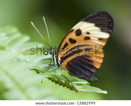 Beautiful Butterfly - stock photo
