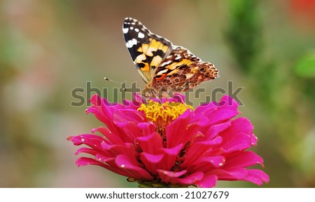 Beautiful butterfly feeding on red flower