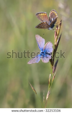 beautiful butterfly in nature - stock photo