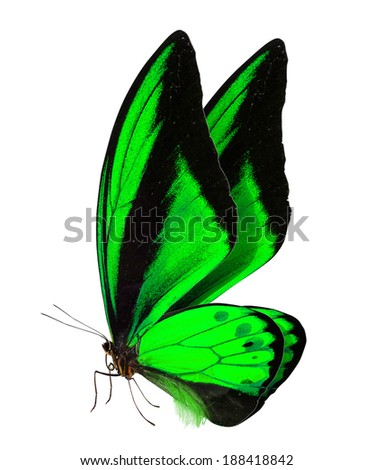 beautiful butterfly isolated on a white background - stock photo
