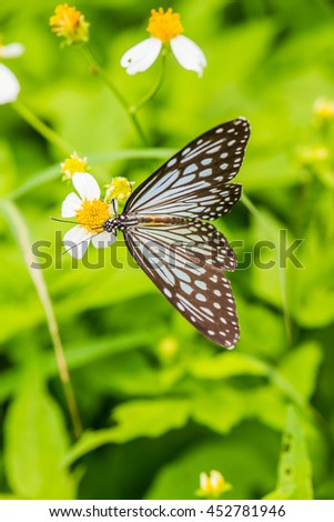 Beautiful butterfly on flower in the garden, Thailand - stock photo