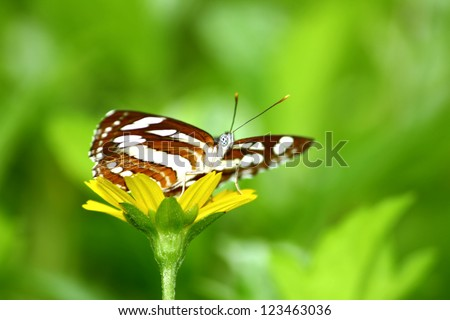 Beautiful butterfly on leaf - stock photo