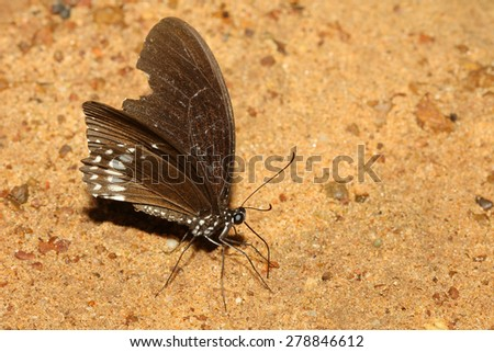 beautiful butterfly on the sand in thailand - stock photo