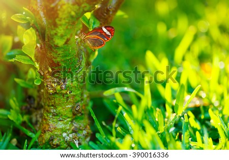Beautiful butterfly outdoors, gorgeous insect sitting on the tree in the garden in bright sunny day, beauty of wild nature - stock photo