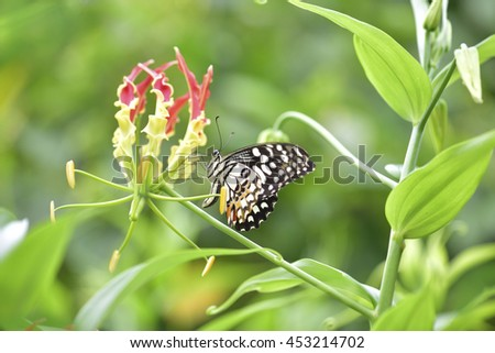 Beautiful  butterfly  perching on  flower