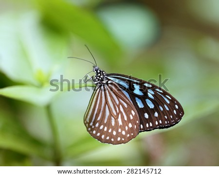 Beautiful butterfly photographed closeup on green background - stock photo