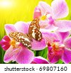 Beautiful butterfly sitting on an orchid flower - stock photo