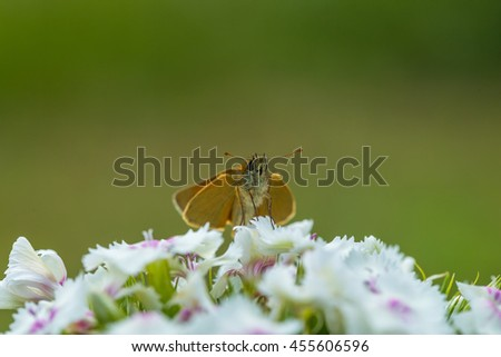 Beautiful butterfly sitting on flower. Insect macro photographed at summer - stock photo
