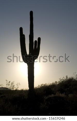 Beautiful cactus sunset - stock photo