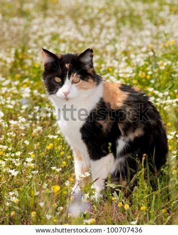 Beautiful calico cat sitting in the middle of spring wildflowers - stock photo
