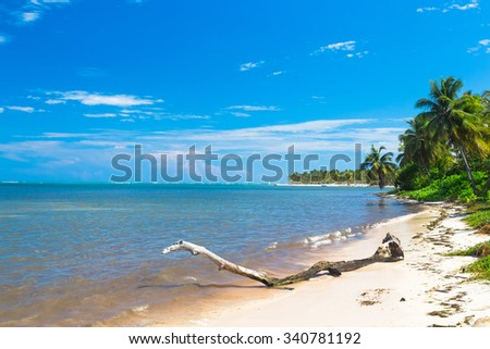 Beautiful caribbean sand beach in Dominican Republic