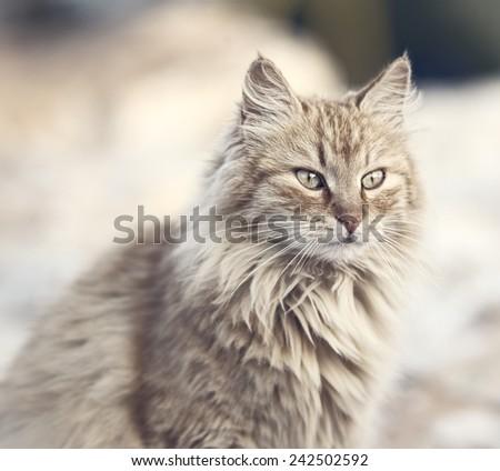 Beautiful Cat - stock photo