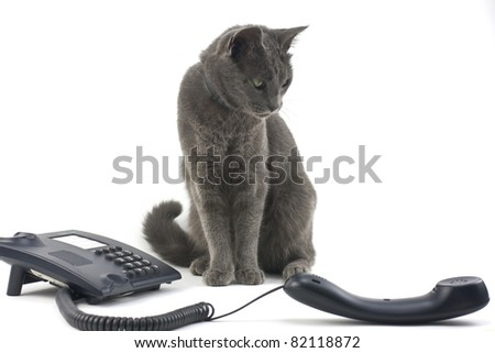 Beautiful cat and phone isolated over white background - stock photo