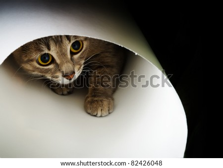 Beautiful cat curiously looking up on a black background - stock photo
