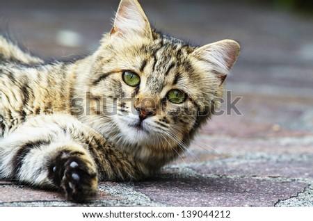 beautiful cat in a garden - stock photo