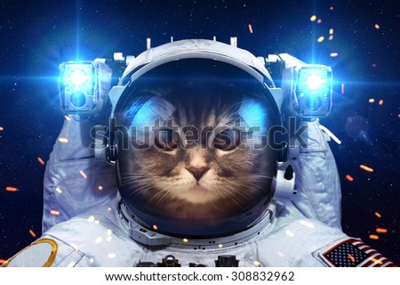 Beautiful cat in outer space. Elements of this image furnished by NASA.