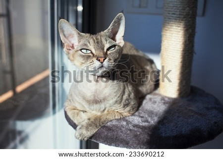 Beautiful cat is sitting on the scratching post and enjoying the warmth of sunlight. Cat is sitting near the window. Pet Equipment, Accessories and supplies.