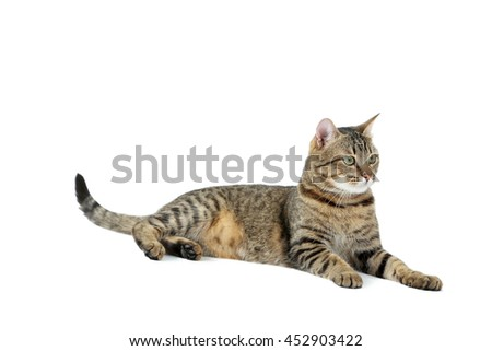 Beautiful cat isolated on a white, close up