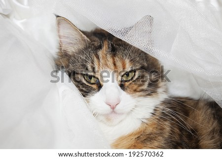 Beautiful cat lying on a bed and looking